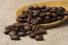 Granos del café sólo Fotos de archivo