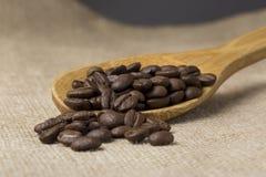 Granos del café sólo Fotos de archivo libres de regalías