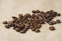 Granos del café sólo Imagen de archivo