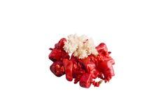 Granos del coral rojo y coral imagenes de archivo