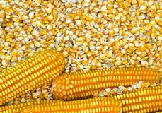 Granos del maíz Imagenes de archivo