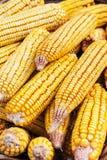 Granos del maíz Fotos de archivo