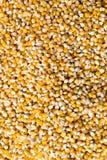 Granos del maíz Fotografía de archivo libre de regalías