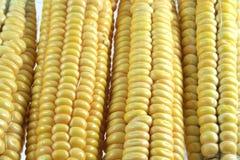 Granos del maíz con el primer de la gotita de agua Fotografía de archivo libre de regalías