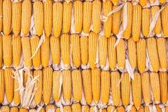 Granos del maíz con el primer de la gotita de agua Imagen de archivo