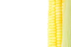 Granos del maíz maduro foto de archivo