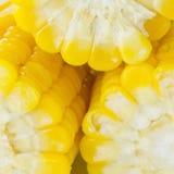 Granos del maíz maduro Imagen de archivo libre de regalías