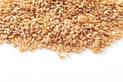 Granos del trigo Imagen de archivo libre de regalías