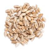 Granos del trigo (aislados en blanco) imagen de archivo