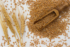 Granos del trigo, cuchara de madera, cebada Foto de archivo
