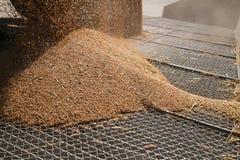 Granos del trigo en la rejilla del silo Imagen de archivo libre de regalías