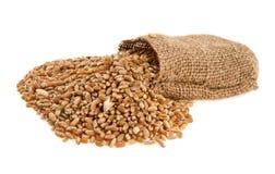 Granos del trigo en un saco Imagen de archivo libre de regalías