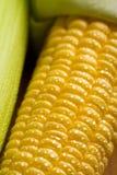 Granos frescos del maíz Fotografía de archivo