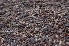 Granos rojos del arroz Fotografía de archivo libre de regalías