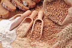 Granos, salvado y harina del trigo Foto de archivo libre de regalías