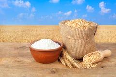 Granos y harina del trigo en fondo del campo de trigo Imagen de archivo libre de regalías