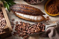 Granos y vaina de cacao fotos de archivo libres de regalías