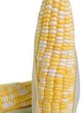 Granoturco dolce su fondo bianco immagine stock libera da diritti
