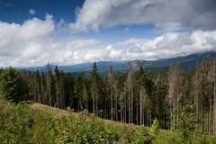 Granskog i de Carpathian bergen Arkivfoton