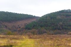 Granskog i de ukrainska Carpathiansna Hållbart klart ekosystem arkivbilder
