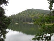 Granskog på den steniga kusten av skogsjön Fotografering för Bildbyråer