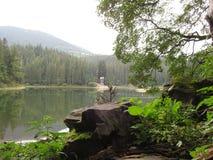 Granskog på den steniga kusten av skogsjön Arkivbild