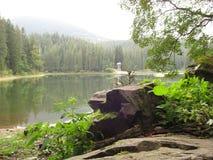Granskog på den steniga kusten av skogsjön Royaltyfri Fotografi