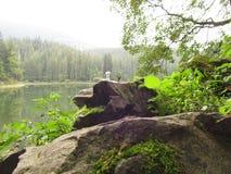 Granskog på den steniga kusten av skogsjön Arkivbilder