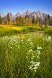Grant teton Nationalpark Lizenzfreies Stockfoto