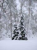 Granträd efter snöfallet Fotografering för Bildbyråer