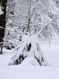 Granträd efter snöfallet Royaltyfri Fotografi