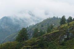 Granträd i Altai berg Arkivbild