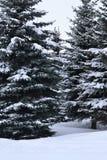 Granträd i snön Royaltyfria Foton