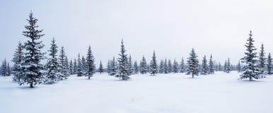 Granträd i vintersnö Arkivfoto