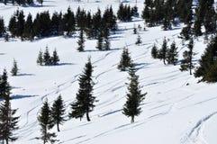 Granträd i vintersnö Fotografering för Bildbyråer