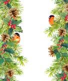Granträd, mistel, röd finkfågel seamless kantjul vattenfärg Royaltyfria Bilder