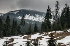Granträd och snöig berg Royaltyfria Bilder
