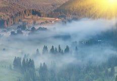 Granträd på äng mellan backar med barrträdskogen i dimma arkivfoto