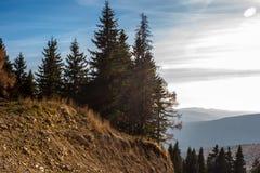 Granträd på skymning i höst Berg i bakgrunden Sol på Arkivfoton
