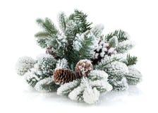Granträdfilial med kottar som täckas med snö Arkivfoton