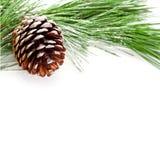 Granträdfilial med pinecone Arkivfoto