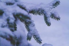 Granträdfilialen under snö, vinterbakgrund, tonade och filtret Royaltyfri Foto
