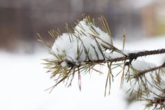 Granträdfilialer som täckas med snö Vinterskogjul och bakgrund för nytt år royaltyfri fotografi