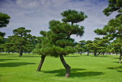 grantrees Arkivbild