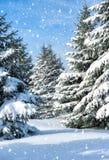 Grantrees som räknas av snow Royaltyfri Fotografi