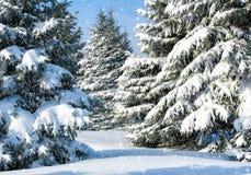 Grantrees som räknas av snow Royaltyfri Bild
