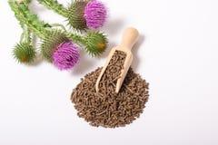 Granulacyjny i świeży oset z kwiatami Silybum marianum zdjęcie stock