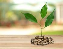 Granules de biomasse Photographie stock libre de droits