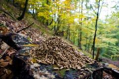 Granules en bois Image stock