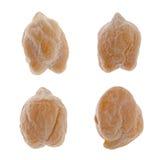 Granuli del cece Fotografia Stock